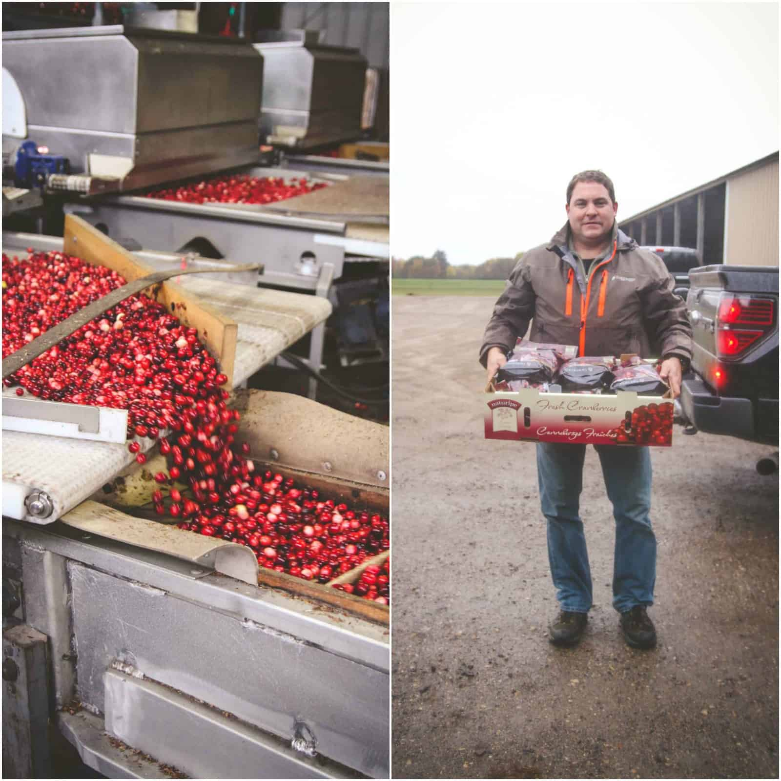 Fresh cranberry harvesting with Habelman Bros Cranberries