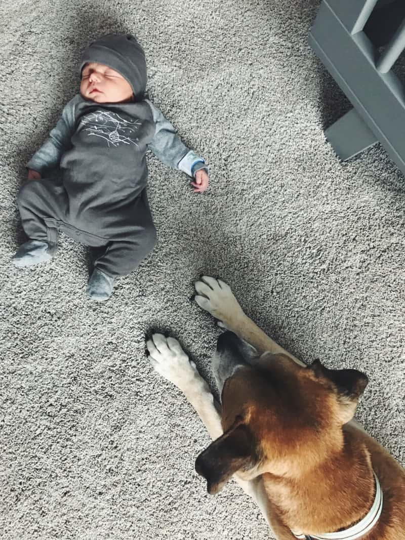 Baby meets dog for the first time, Ben and Clover, dog and baby, dog and newborn