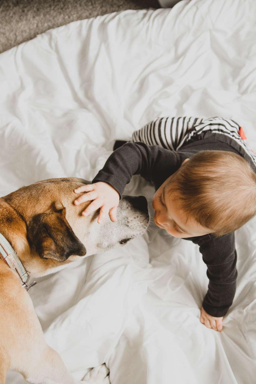 Elderly dog and baby
