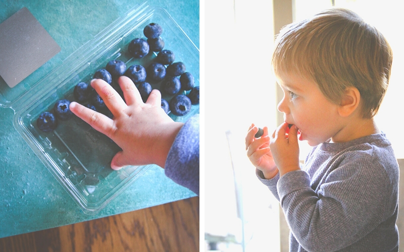 Toddler eating blueberries