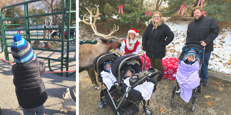 Visiting the reindeer