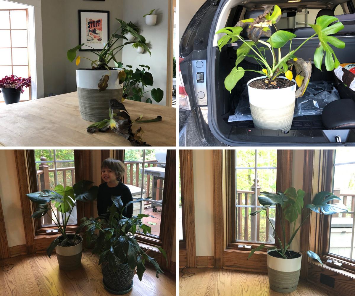 Plant Revival