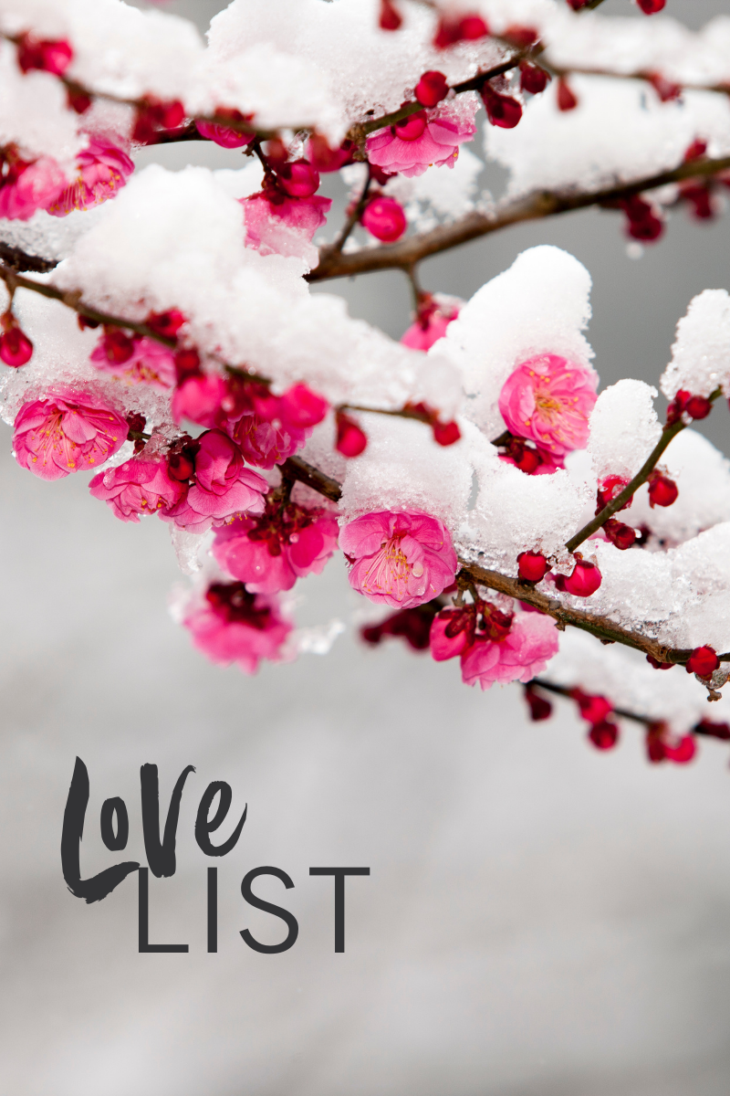 Cherry blossom in the snow